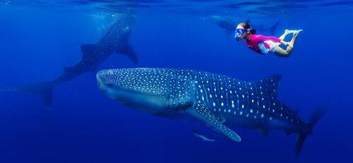 una giovane subacquea nuota con un pesce squalo balena