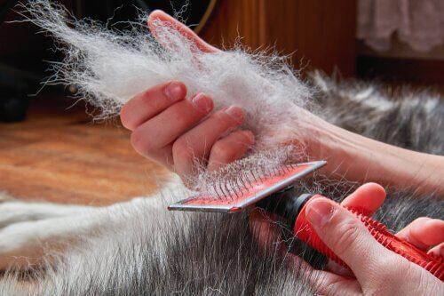 una matassa di pelo raccolta spazzolando un cane