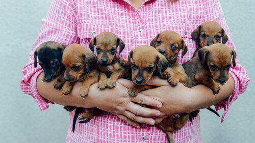 Una ragazza con sette cuccioli