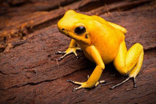 Scopriamo le specie più velenose del mondo