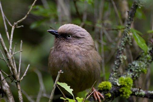 Uccellino grigio su un ramo