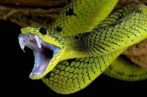 Alla scoperta di tutti i tipi di serpenti del mondo