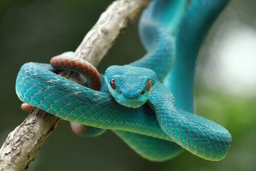 I sensi dei serpenti: armi davvero infallibili