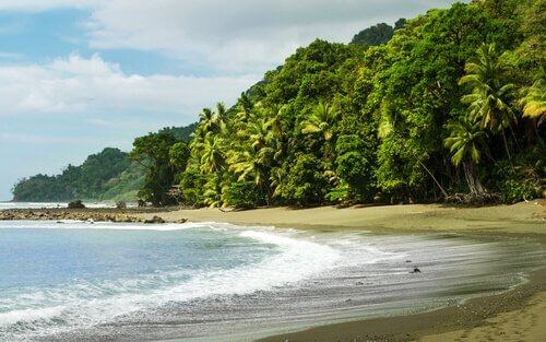 La fauna del Parco nazionale del Corcovado (Costa Rica)