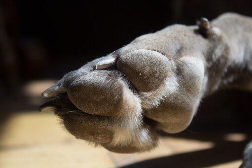 una zampa di cane vista da vicino