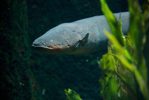La foresta dell'Amazzonia e la sua fauna