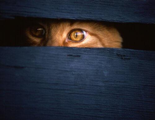 I gatti spia della CIA