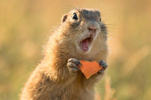 Si può tenere uno scoiattolo come animale domestico?