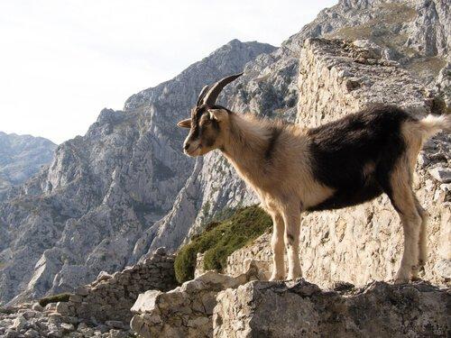 5 parchi nazionali della Spagna che dovete visitare