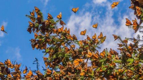 uno stormo di farfalle sulla cima di un albero