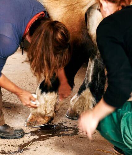 Vaccino per il tetano nei cavalli