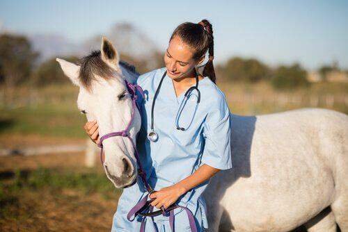Veterinaria parla con cavallo