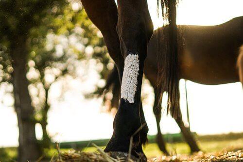 Zampa di cavallo