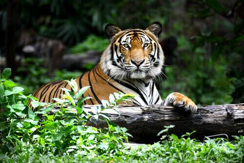 10 animali in pericolo di estinzione più a rischio
