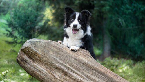 5 razze di cani obbedienti