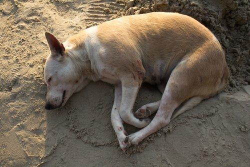 Cane sdraiato sul terreno