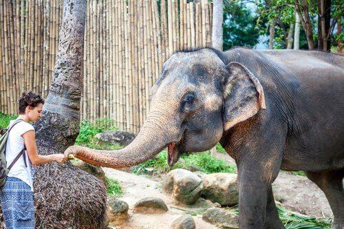 Santuari di animali nel mondo, quali visitare?