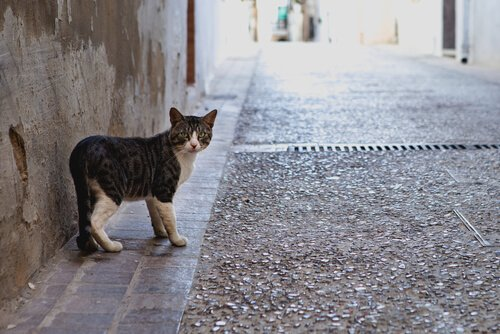 Perché i gatti escono e tornano a casa?