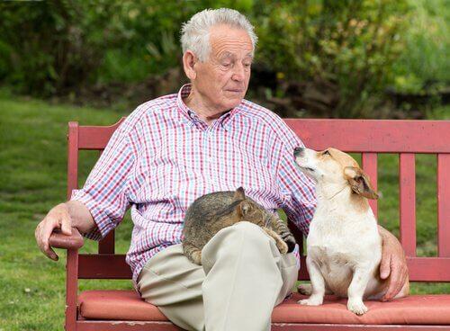 Vivere più a lungo grazie agli animali domestici