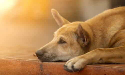 6 consigli per tirare su il morale ad un cane