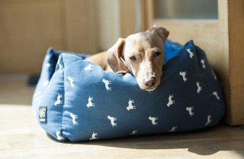 6 posti adatti per mettere la cuccia del cane