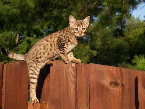 Savannah sullo steccato