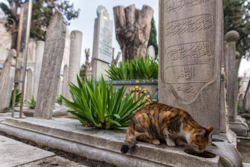 Conosciamo Istanbul, la città dei gatti