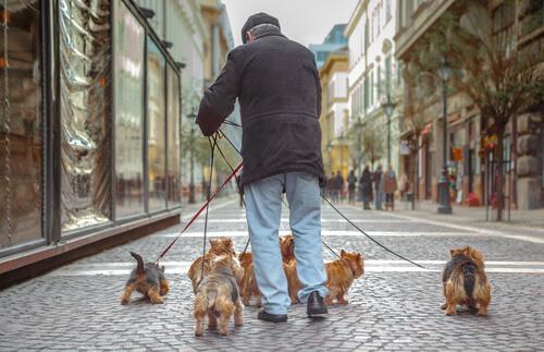 Anziano con cani a passeggio