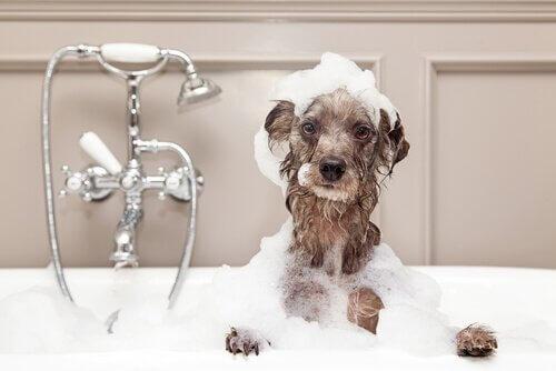 Come fare il bagno al cane in inverno