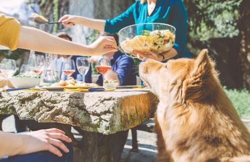 Cane a tavola con persone