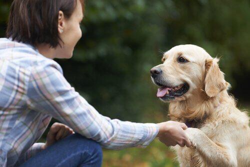 Cane che dà la zampa alla padrona