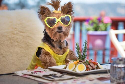 Cane con occhiali che mangia insalata a tavola
