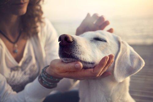 Padrona accarezza cane
