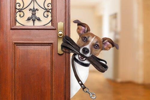 Cane con guinzaglio in bocca sulla porta