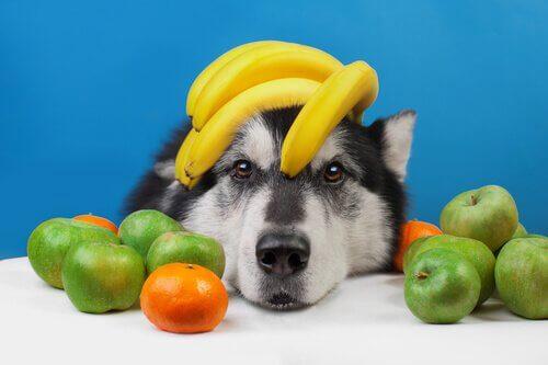 Frutta per il cane