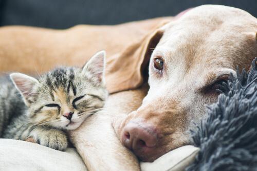 Cane e gatto sdraiati accoccolati