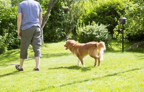 Perché i cani ci seguono dappertutto?