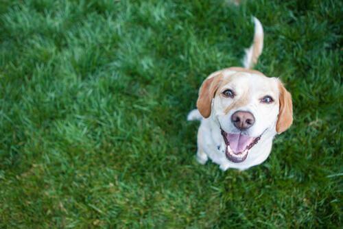 Problemi cardiaci del cane: 4 abitudini salutari per prevenirli
