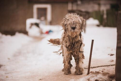 Cane legato sulla neve
