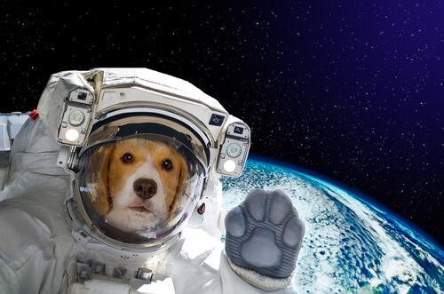 Cane nello spazio