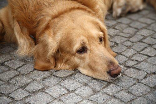 Cane sdraiato sul marciapiede