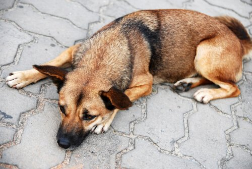 Cane sdraiato per strada