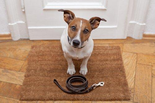 Educare il cane durante le passeggiate quotidiane