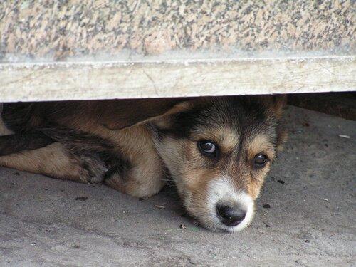 Come trattare la paura del temporale nei cani