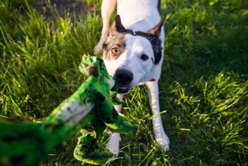 Il Mio Cane Ha La Tendenza A Mordere Tutto Come Evitarlo I Miei