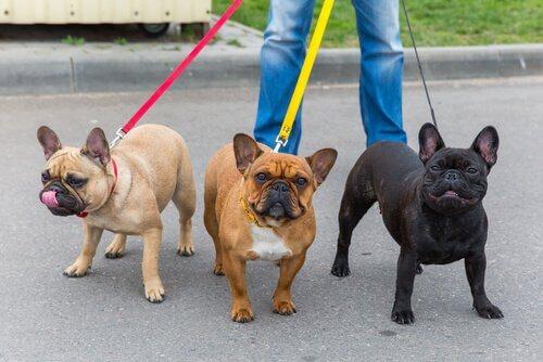 Portare a spasso i cani per lavoro