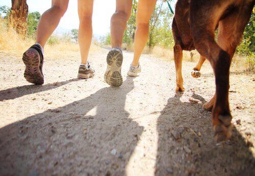 Persone a passeggio con cane