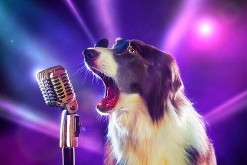 Canzoni sui cani: ecco le 8 migliori