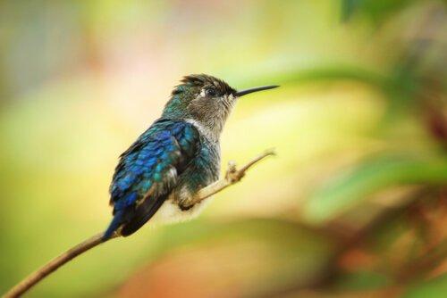 Specie di uccelli che vivono in Panama