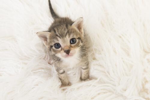 Come prendersi cura di un gatto appena nato